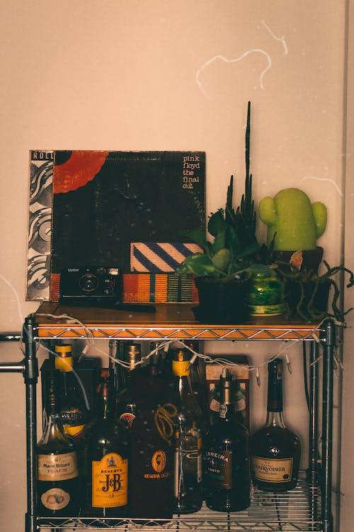 Kostenloses Stock Foto zu analogkamera, handy, innere, kaktus