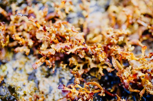 Free stock photo of macro, tide pool