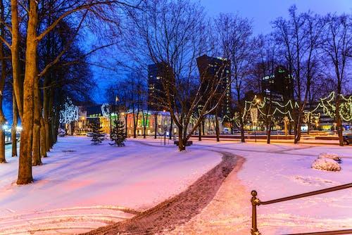 Photos gratuites de chrystmas, klaipeda, зима