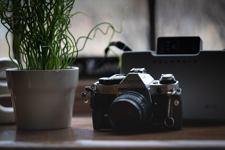 Kostnadsfri bild av dslr, kamera, kanon, krukväxt