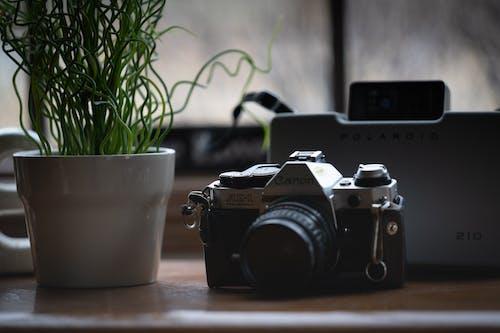 Gratis lagerfoto af Canon, DSLR, kamera, potteplante