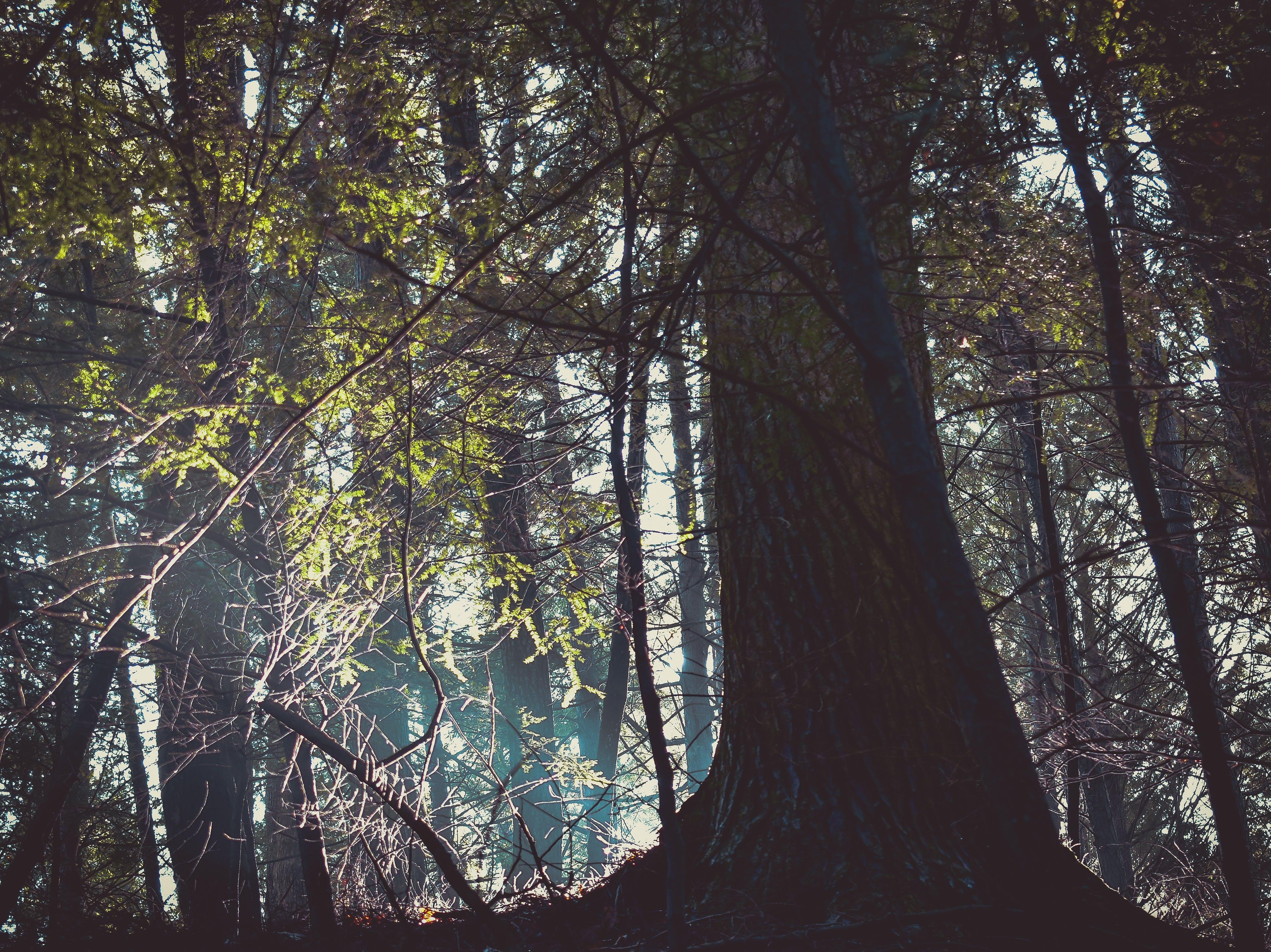 Fotobanka sbezplatnými fotkami na tému les, lesy, prostredie, stromy