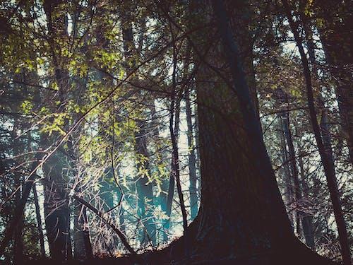 分支機構, 森林, 樹木, 樹林 的 免费素材照片