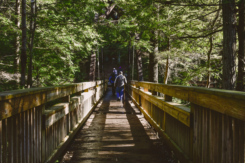 Безкоштовне стокове фото на тему «вказівки, Денне світло, дерев'яний міст, дерева»