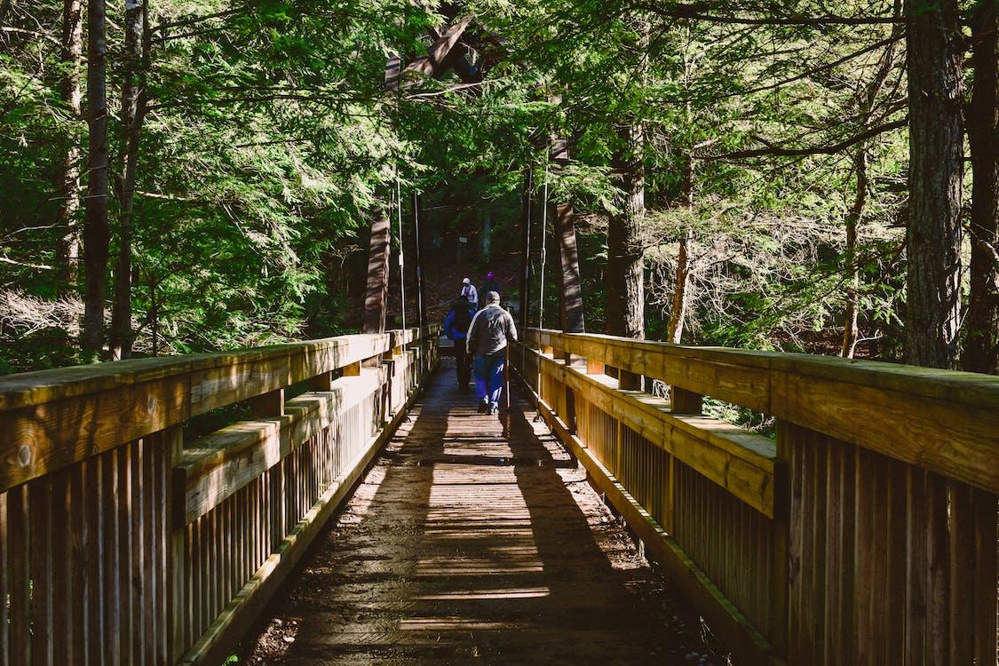 bro, dagsljus, gångbro