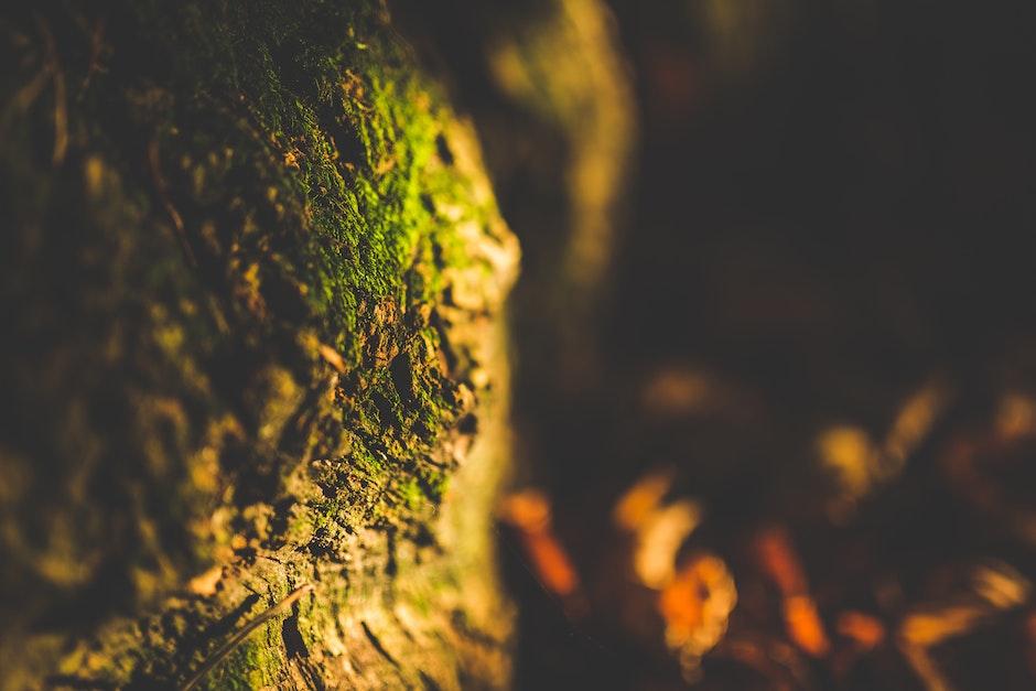 Close Up Shot of Green Moss