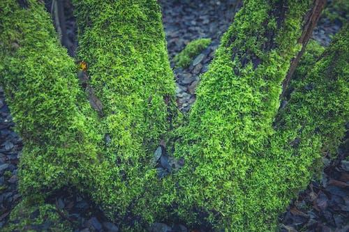 Ilmainen kuvapankkikuva tunnisteilla kasvi, keskittyminen, kivi, lähikuva