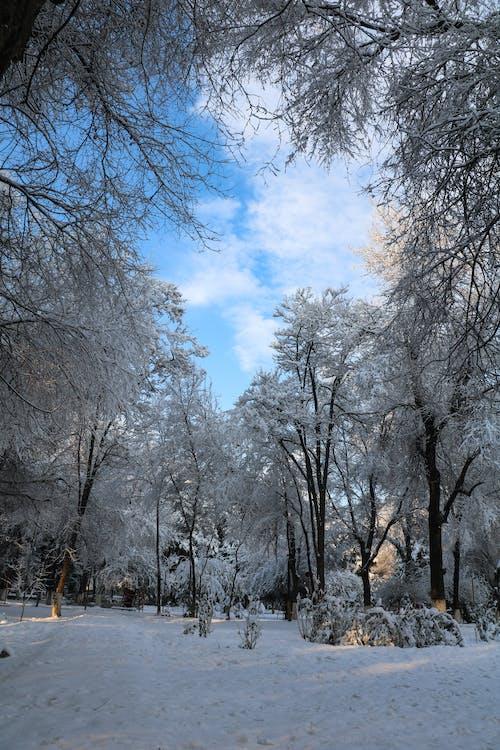 Foto profissional grátis de neve, retrato
