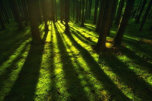 คลังภาพถ่ายฟรี ของ กลางวัน, การเจริญเติบโต, ฉาก, ต้นไม้