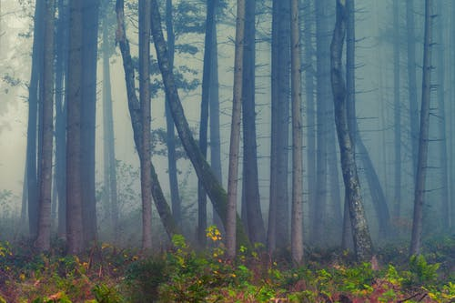 Forest Surrounded By Fog