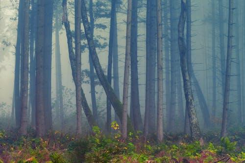 Безкоштовне стокове фото на тему «дерева, ліс, мальовничий, навколишнє середовище»