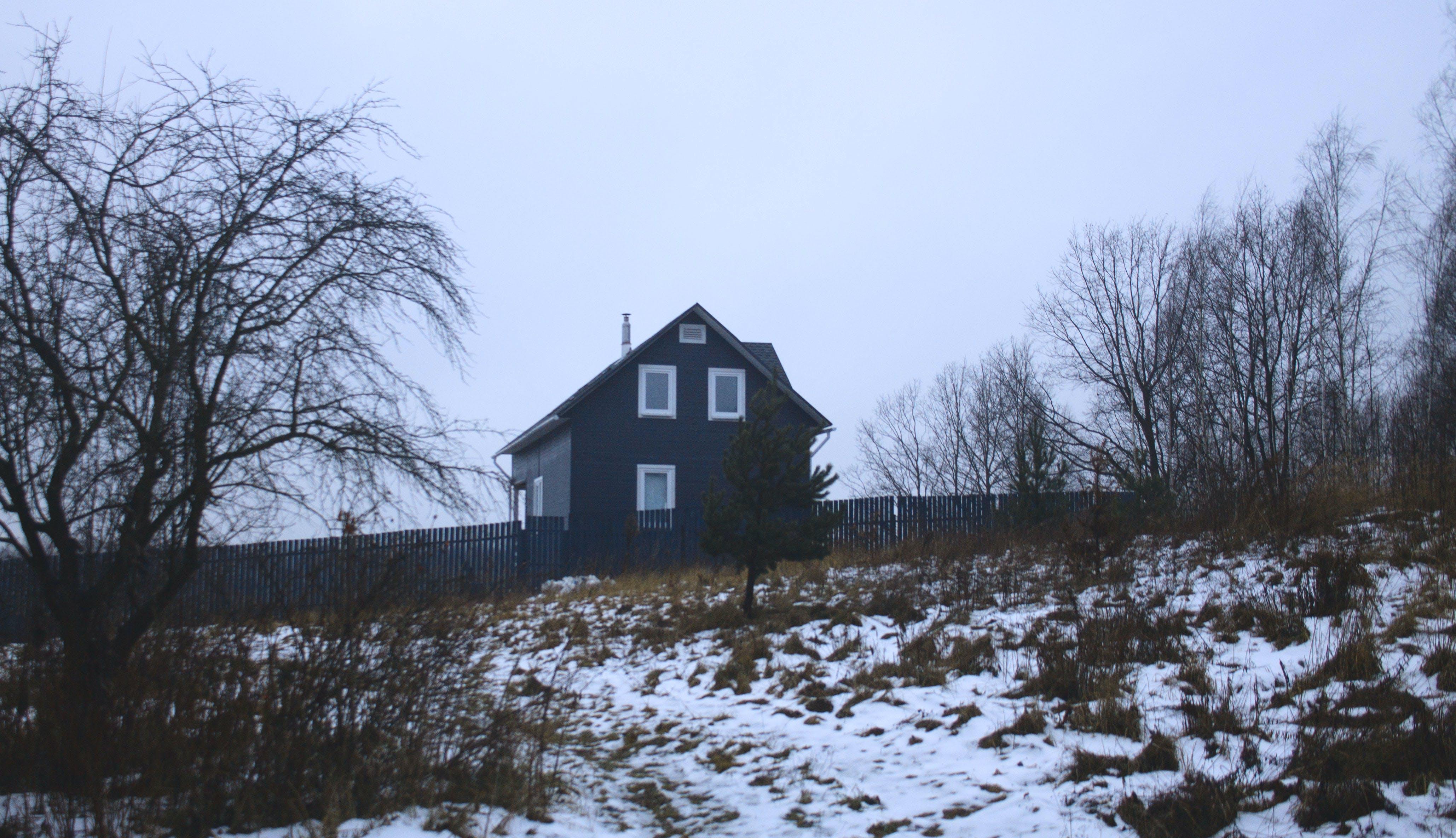 Foto d'estoc gratuïta de arbres, hivern