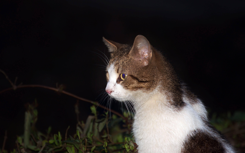 Free stock photo of cat, flashlight, night, pet