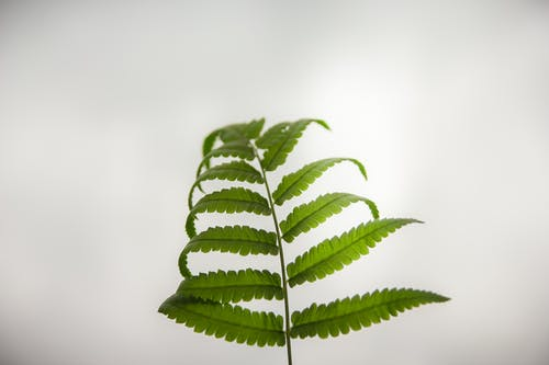 Close-up Photography of Green Fern Leaf