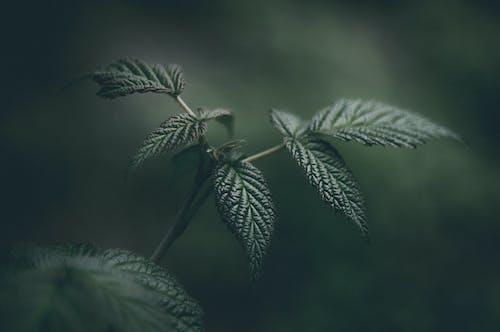 Foto stok gratis hijau, kilang, makro, merapatkan