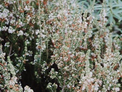 Ilmainen kuvapankkikuva tunnisteilla kasvit, kesä, kimppu, kukat