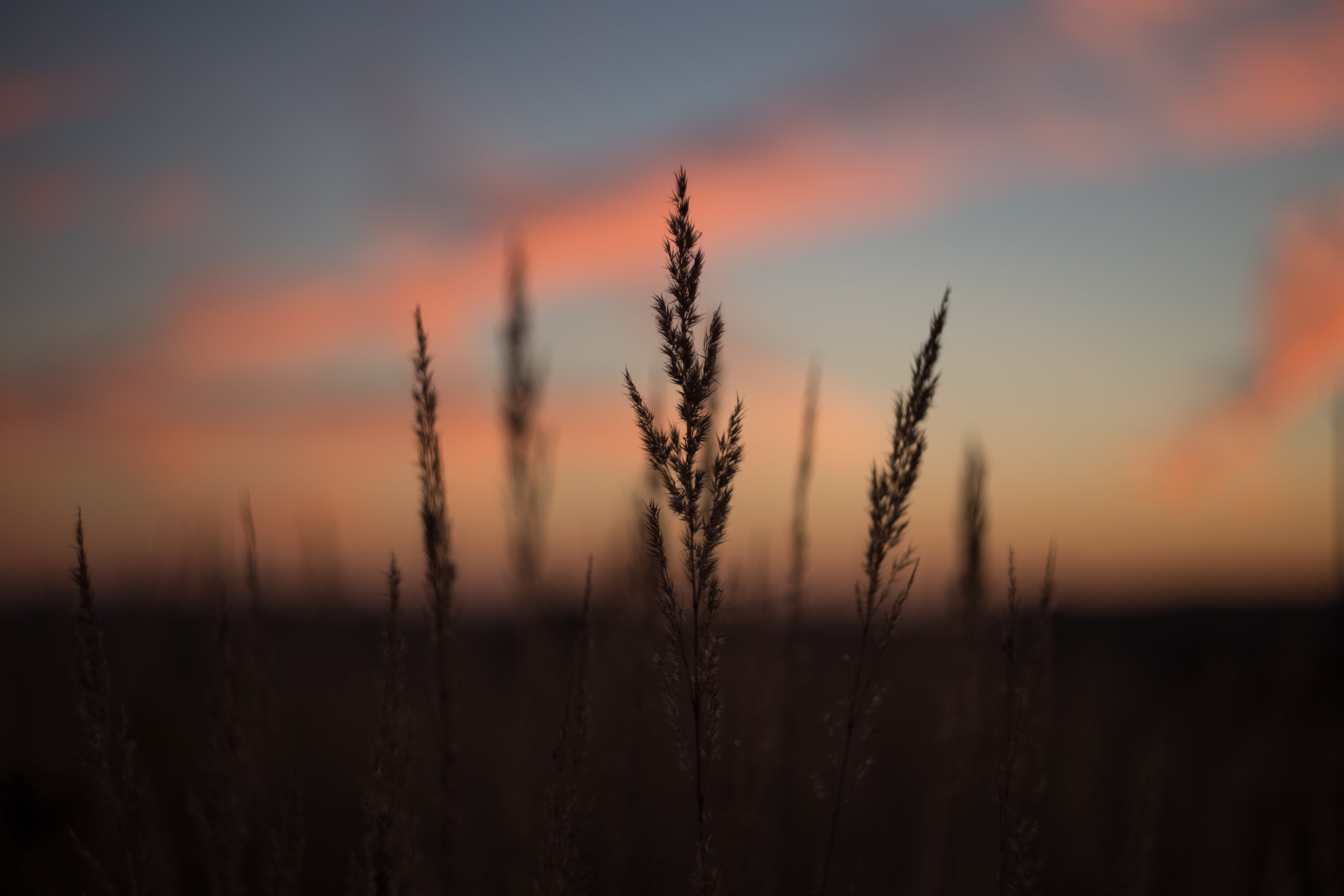 Silhouette of Plant during Golden Time