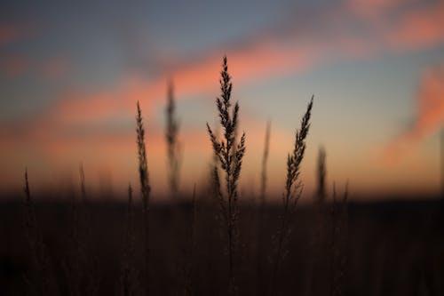 Δωρεάν στοκ φωτογραφιών με Ανατολή ηλίου, αυγή, γρασίδι, δύση του ηλίου