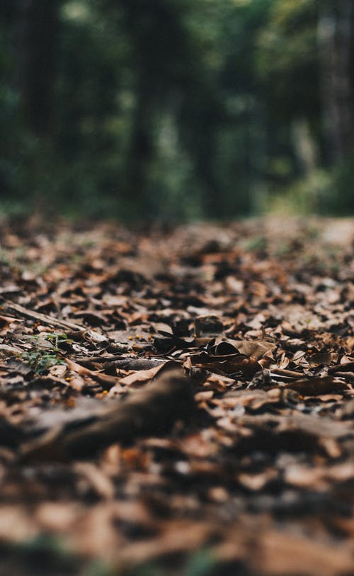 Selective Photography Of Withered Leaves On Ground