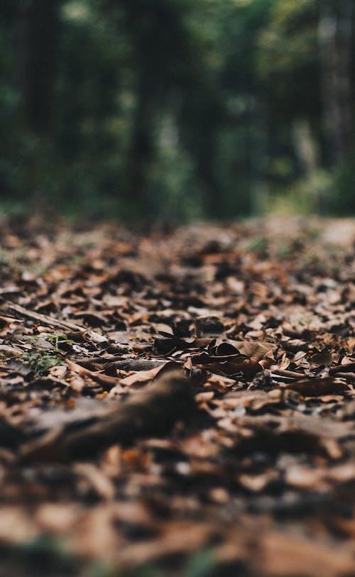 Δωρεάν στοκ φωτογραφιών με αλέθω, βάθος πεδίου, ξηρά φύλλα, ξηρός