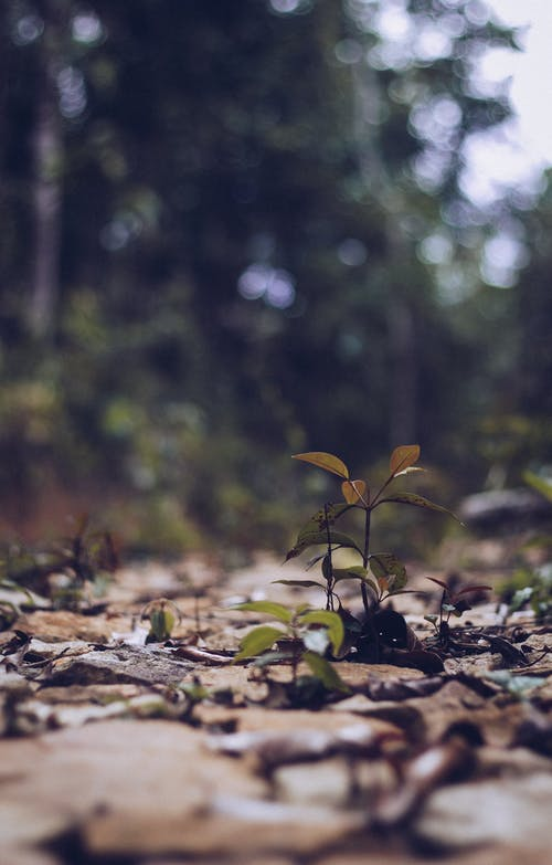 Δωρεάν στοκ φωτογραφιών με ανάπτυξη, γκρο πλαν, γραφικός, δέντρα