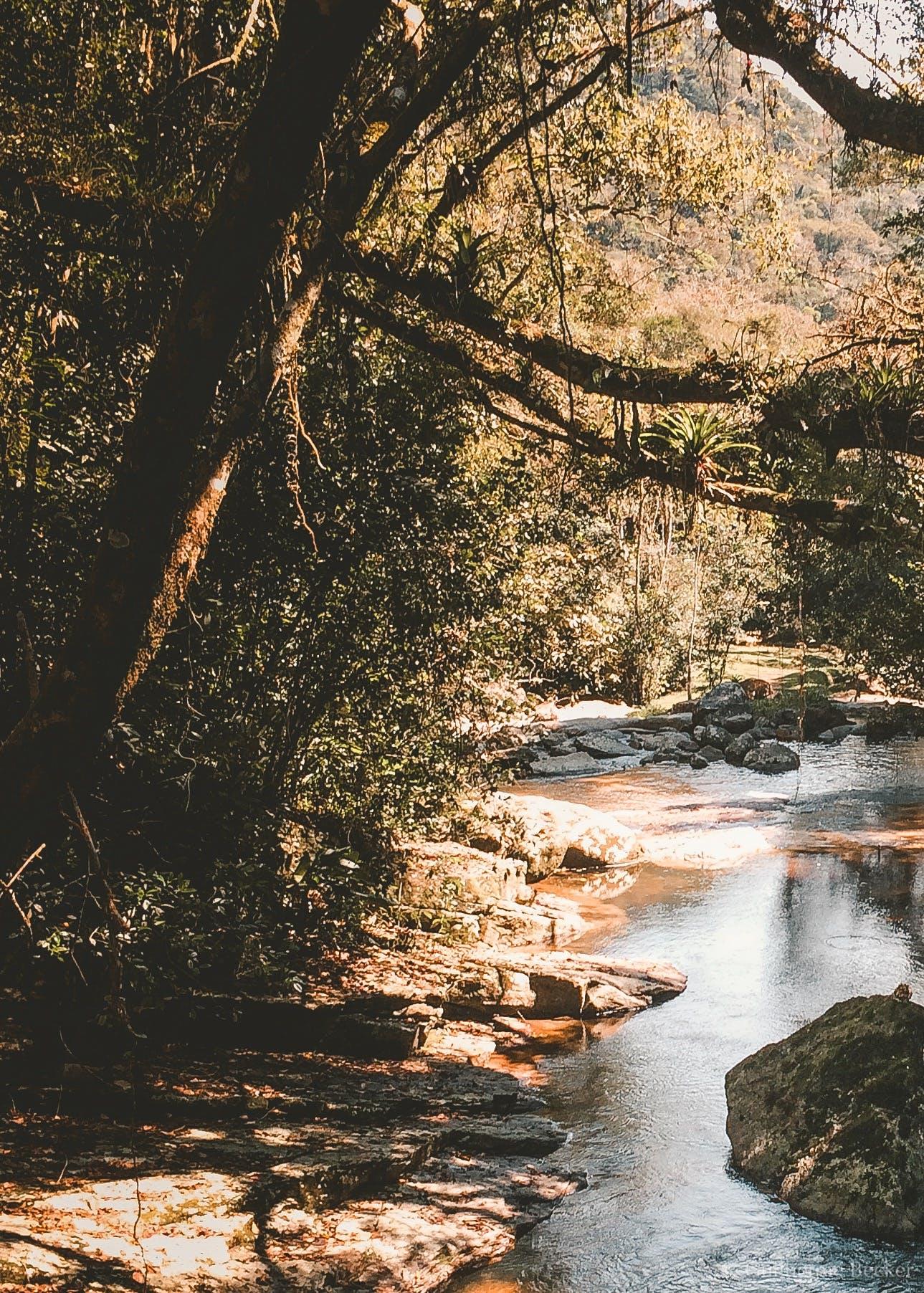 Free stock photo of life, nature, travel