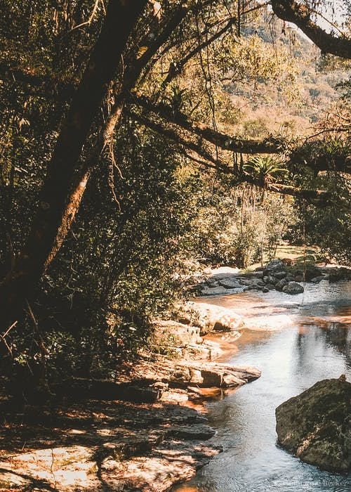 Gratis lagerfoto af liv, natur