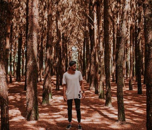 Foto d'estoc gratuïta de arbres, bosc, boscos, home