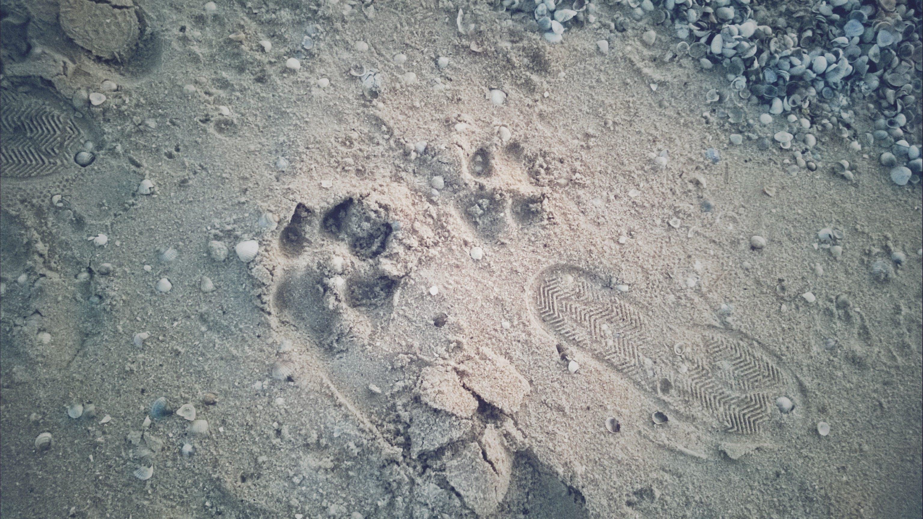 Free stock photo of beach, footprints on the sand, sea