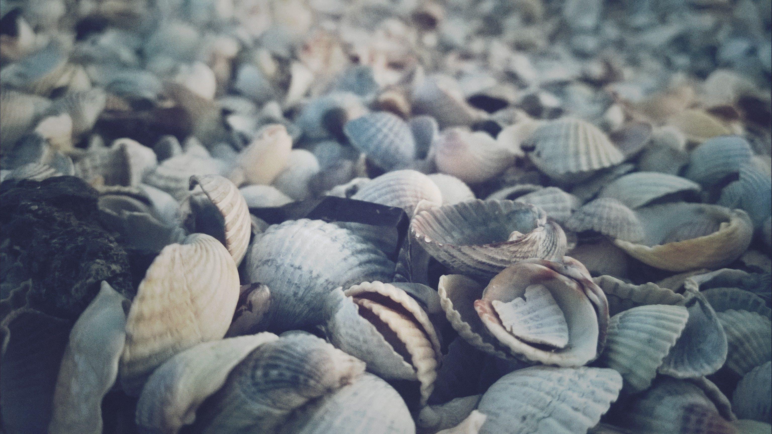 Free stock photo of beach, seashells
