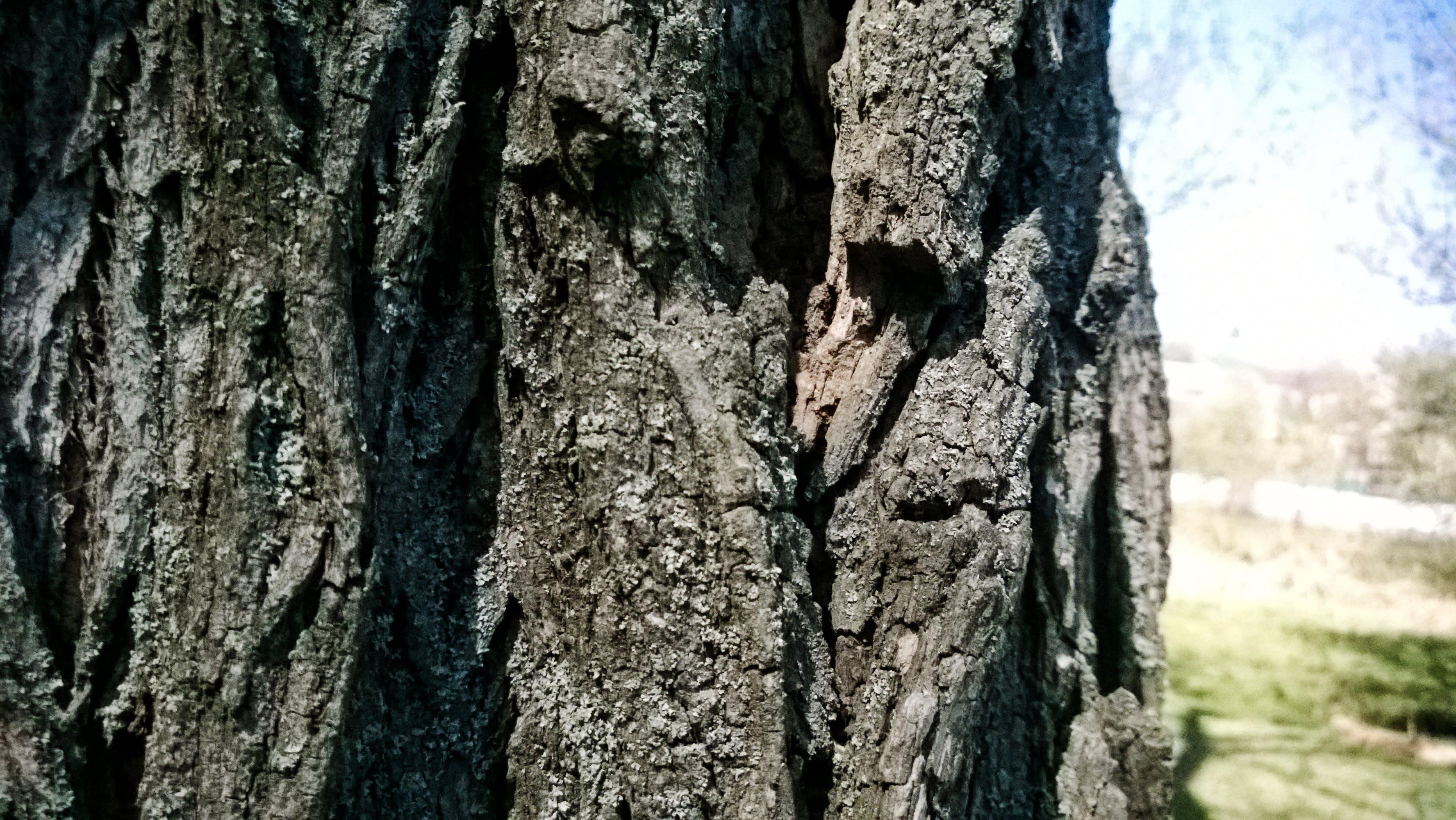 Free stock photo of barque, close-up, tree