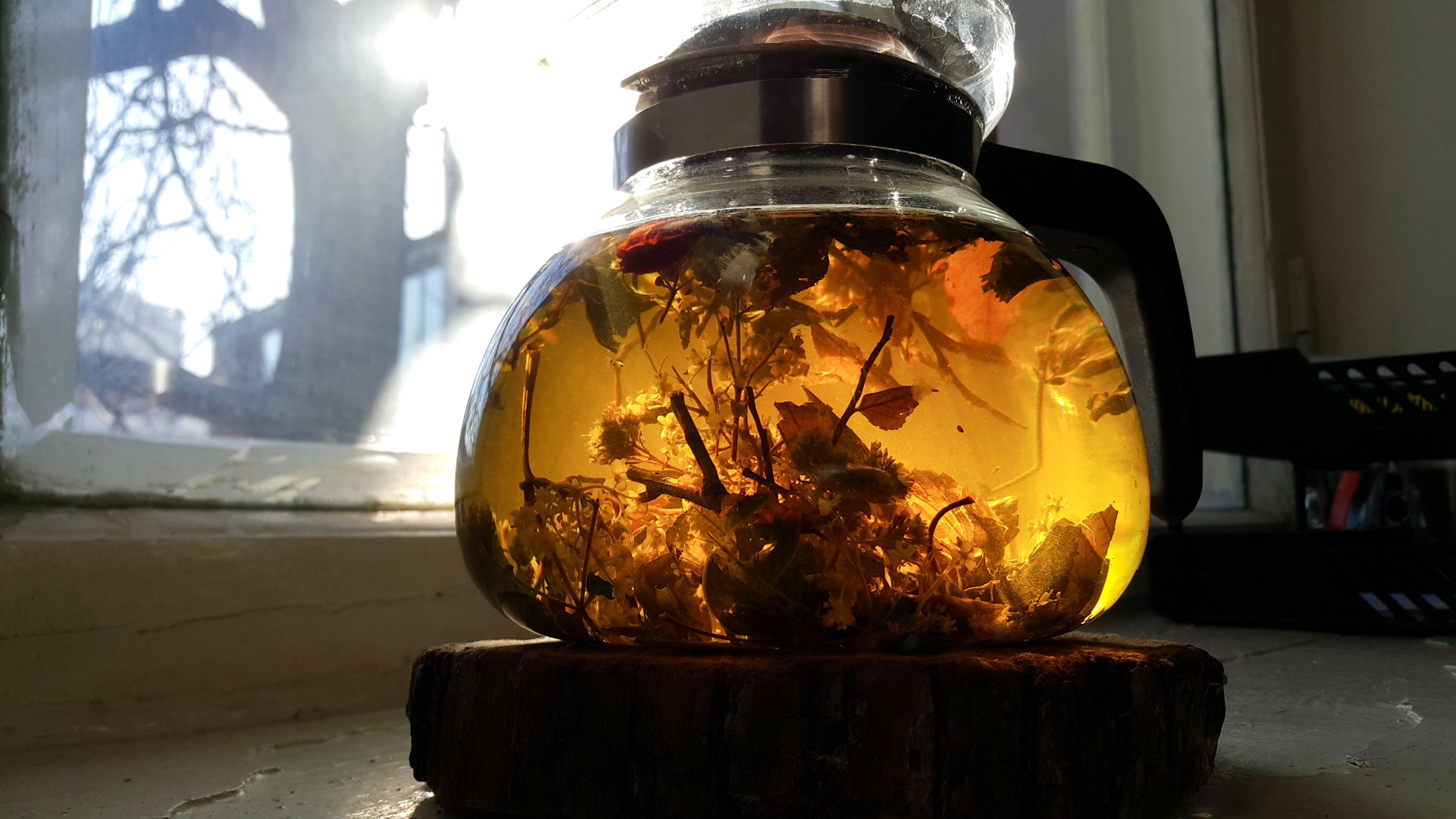 Free stock photo of herbs, magic, sunny day, tea