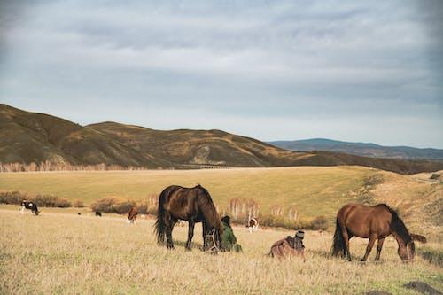 Foto profissional grátis de beleza na natureza, campina, cavalo, natureza