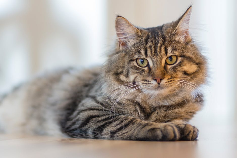 How To Keep Your Cat Happy And Healthy
