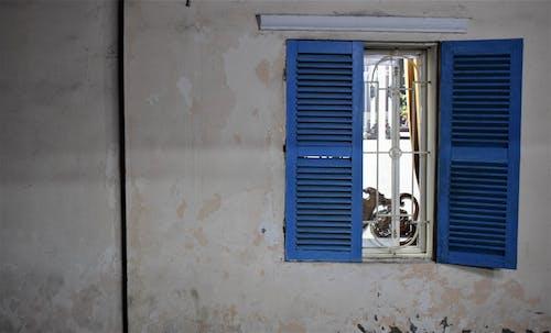 Fotos de stock gratuitas de asiático, azul, blanco, calle