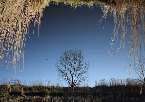 シュルレアリスム, ストロー, 冬, 反射の無料の写真素材