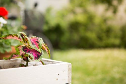 Безкоштовне стокове фото на тему «copy space, єдина квітка, єдиний об'єкт, ботаніка»