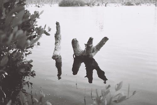 Бесплатное стоковое фото с белый, вода, голубой, дерево