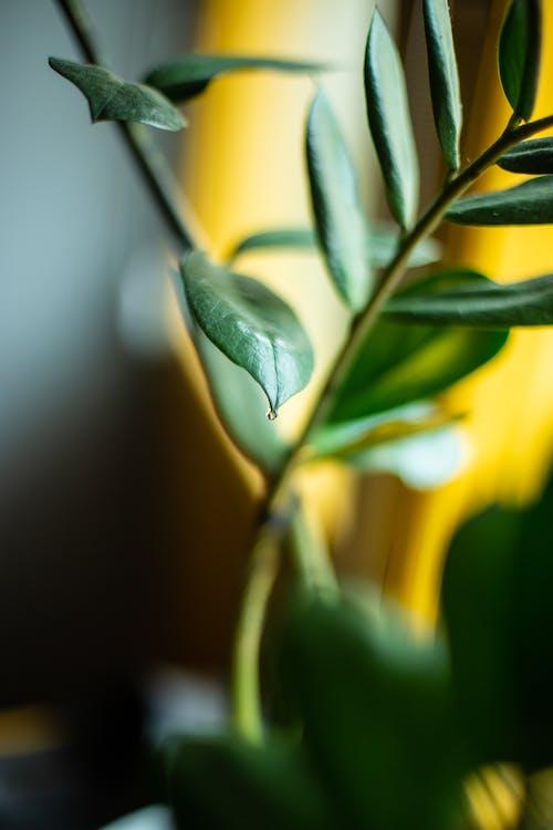 Δωρεάν στοκ φωτογραφιών με macro, εργοστάσιο, φύλλα