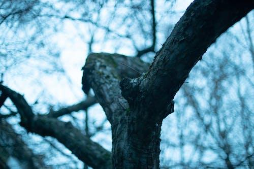 Imagine de stoc gratuită din arbore, copac, drum