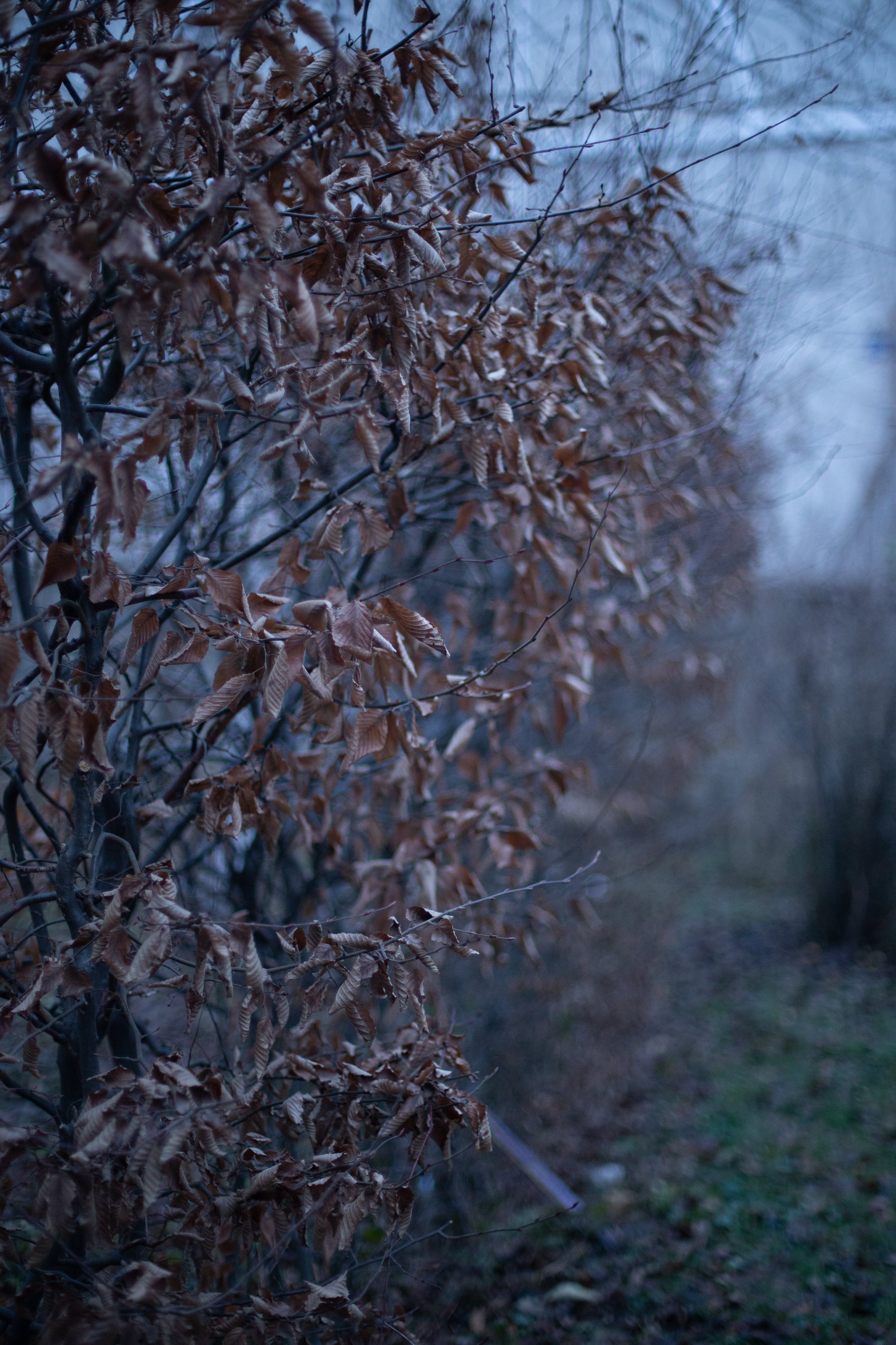 Free stock photo of bush, nature