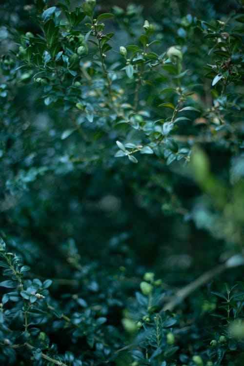 Imagine de stoc gratuită din arbust, natură, parc