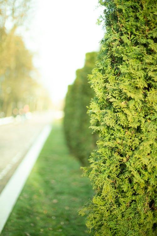 Imagine de stoc gratuită din arbust, drum, natură