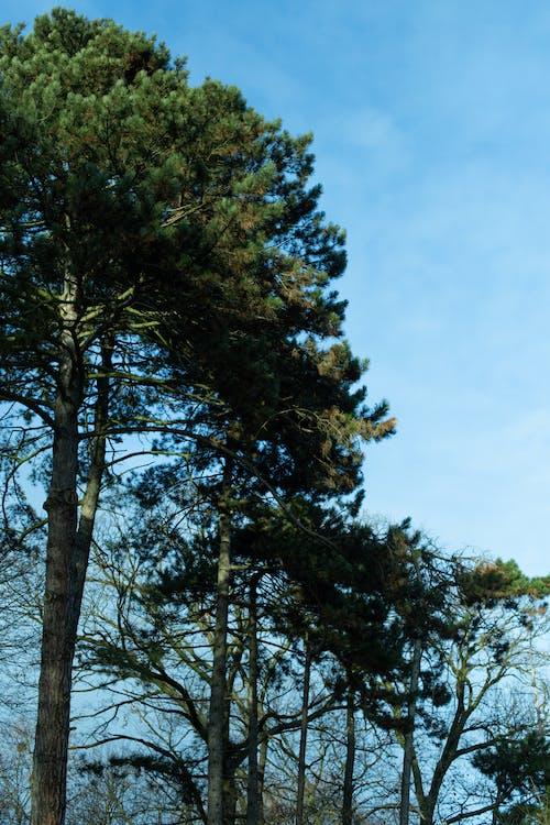 Imagine de stoc gratuită din arbore, copac, natură