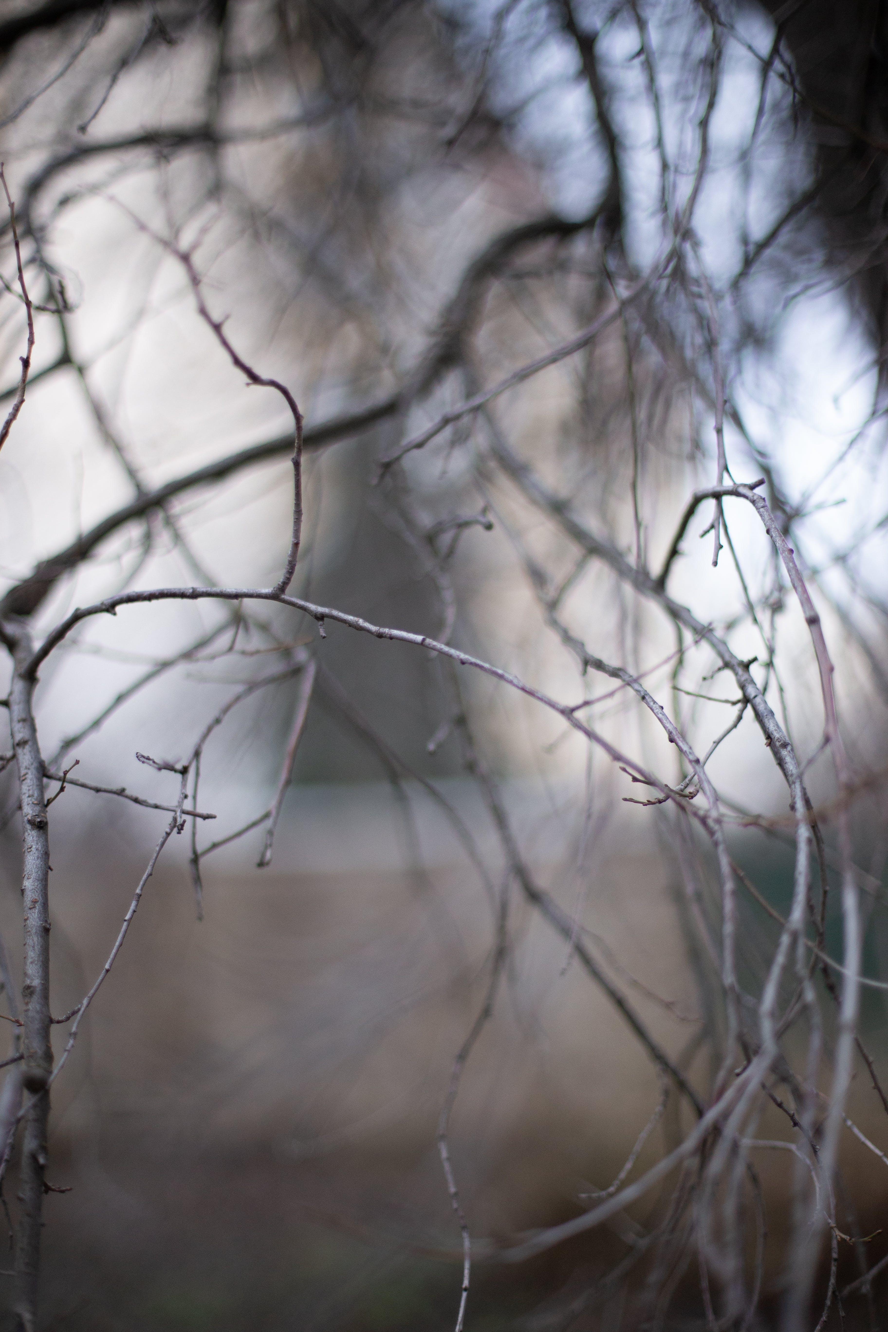 Free stock photo of nature, street, tree