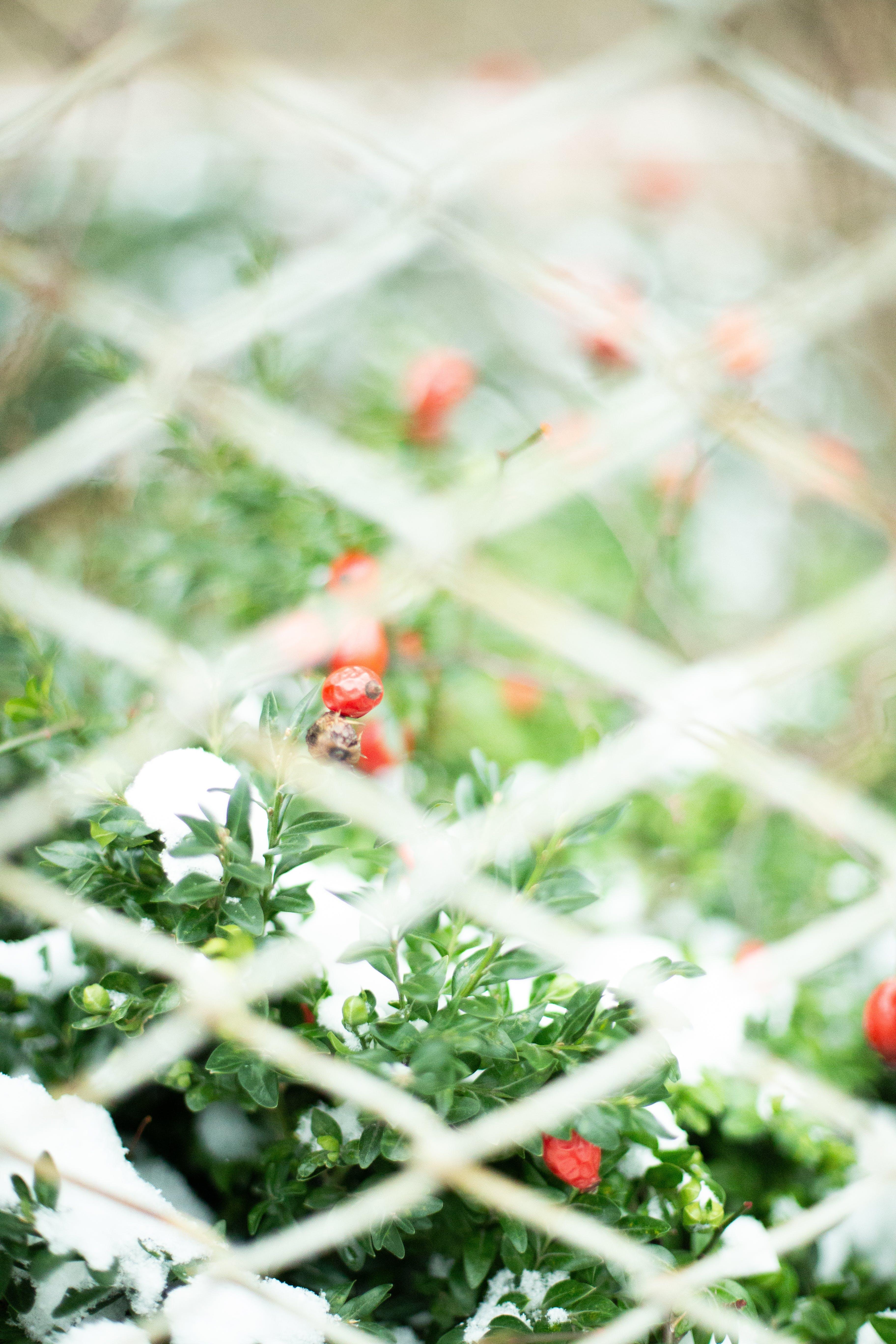 Free stock photo of background, bush, nature