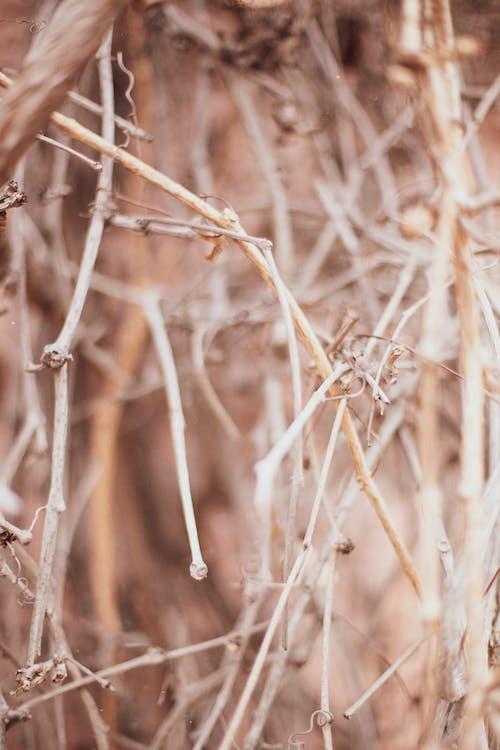 Imagine de stoc gratuită din arta fundal, drum, natură