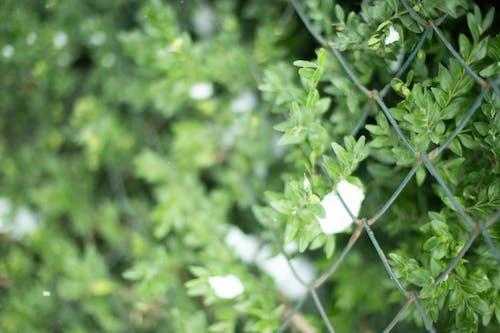 Imagine de stoc gratuită din arbust, fundal, natură