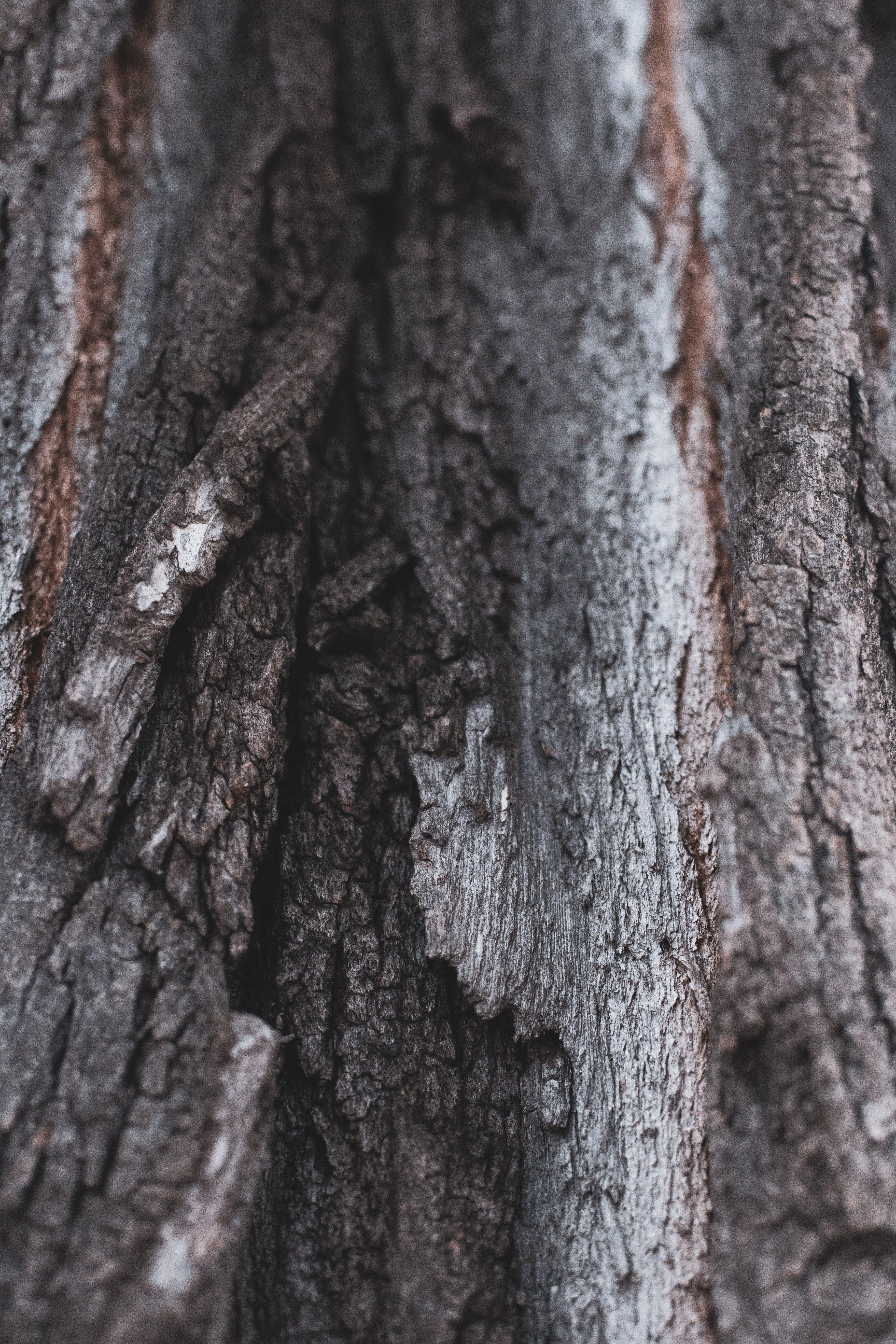 Free stock photo of background, nature, tree