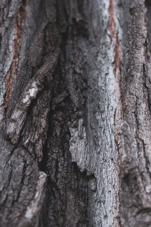Imagine de stoc gratuită din arbore, copac, fundal